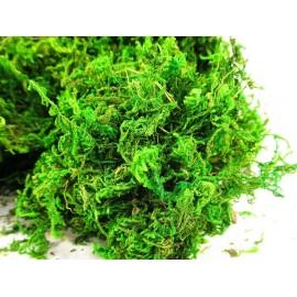 Mech, naturalny mech florystyczny 750 g intensywny zielony kolor