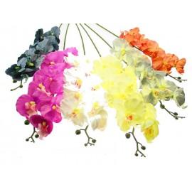 Storczyk jesienny pojedynczy 75 cm różne kolory