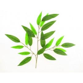 Mango liść zielony 60 cm