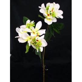 Gałązka rododendrona