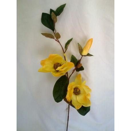 Magnolia potrójna