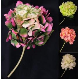Hortensja pojedyncza  50 cm, mix 4 kolorów