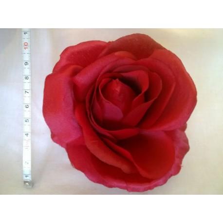 Róża rozwinięta