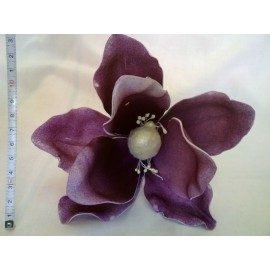 Magnolia pianka