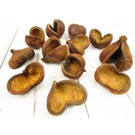 Susz egzotyczny bulwy kokosowe 9cm - kpl 12 szt