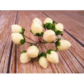 Głóg gałązka, dzika róża 12cm